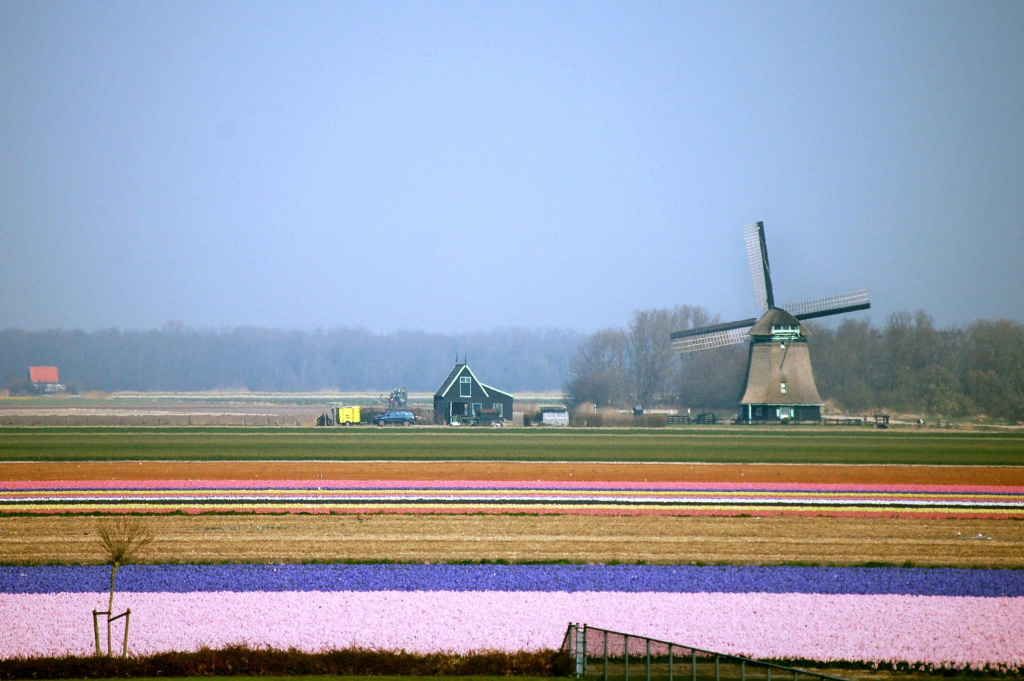 Hollandia nyitott a bitcoin használatára