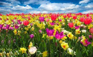 Tavasszal mindenki Satoshi Nakamotoról pletykált