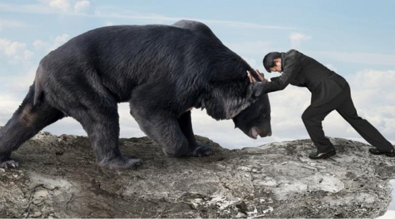 btc medve piacon