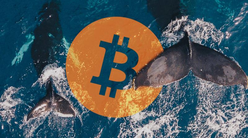bálna riasztó | bikabálna