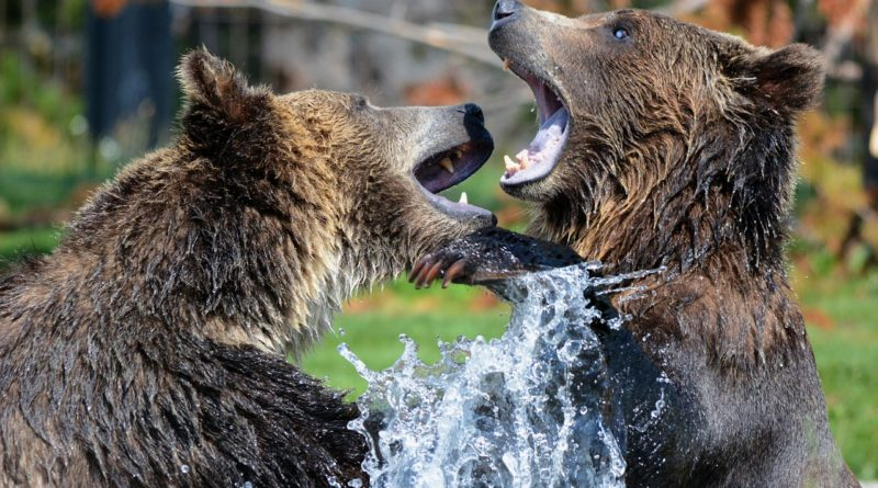 Óvatosságra int a Goldman Sachs medvepiaci indikátora a részvénypiacokon