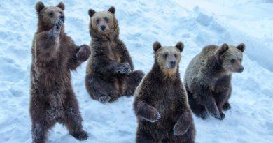 Marad a medvepiac
