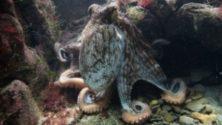 Kraken ADA
