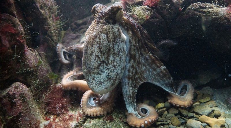 Kraken QuadrigaCX