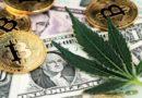 Amerikában a legális kannabisz ipar fuldoklik a dollárban, a bankok nem hajlandóak szóba állni velük
