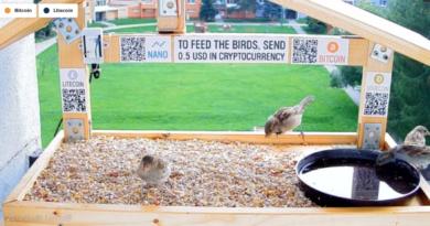 Egy interaktív madáretető élőstream jelent meg a YouTube-on, ahol a felhasználó bitcoin és altcoin adományokból tartja fenn a madáretetőt.
