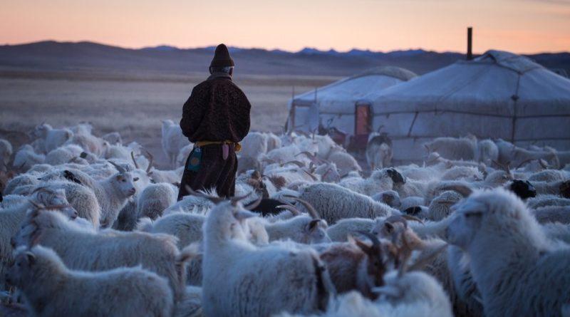 Mongol kecskepásztor esete a blokklánccal