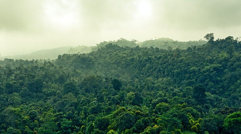 Brazíliában már blokklánccal harcolnak a deforesztáció ellen