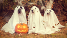 ghost kutya halloween