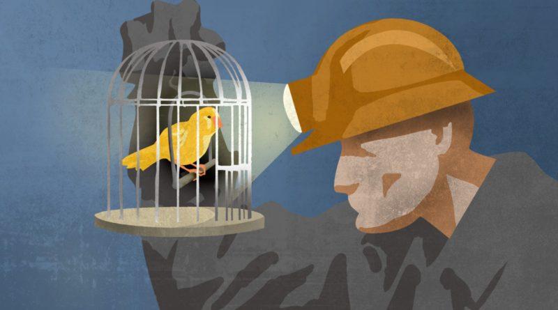Kanári a szénbányában