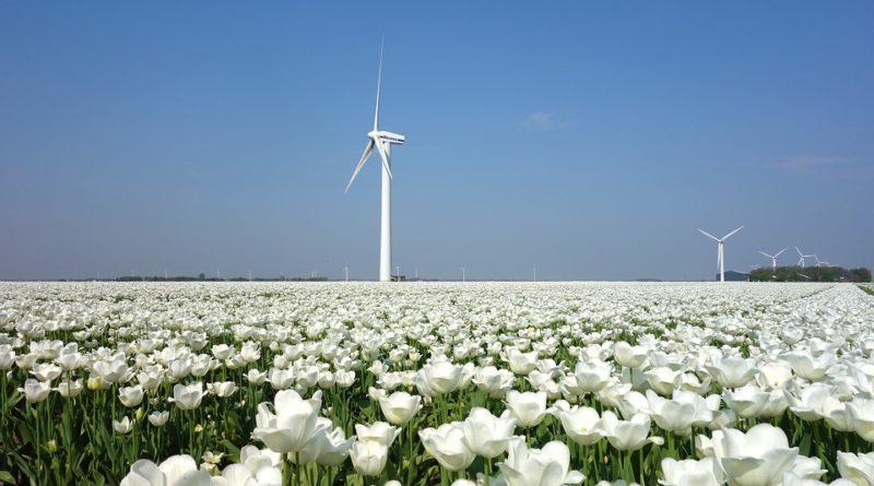 AMDAX Hollandia fehér tulipán szélerőmű
