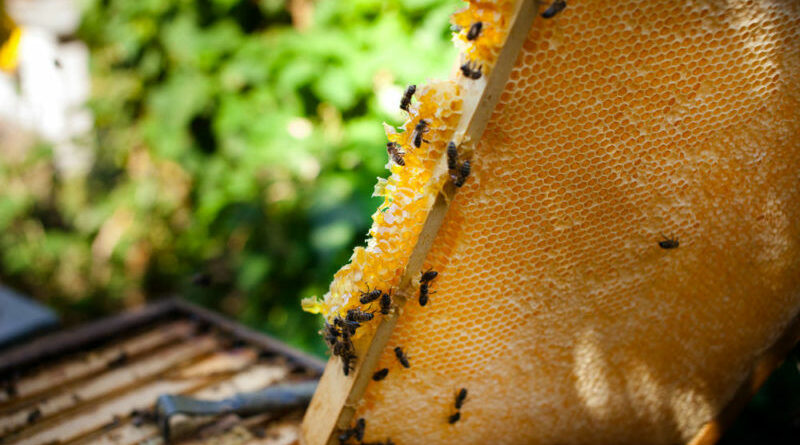 méz radioaktív
