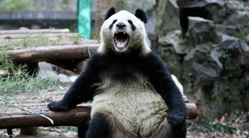 Panda kibertámadás